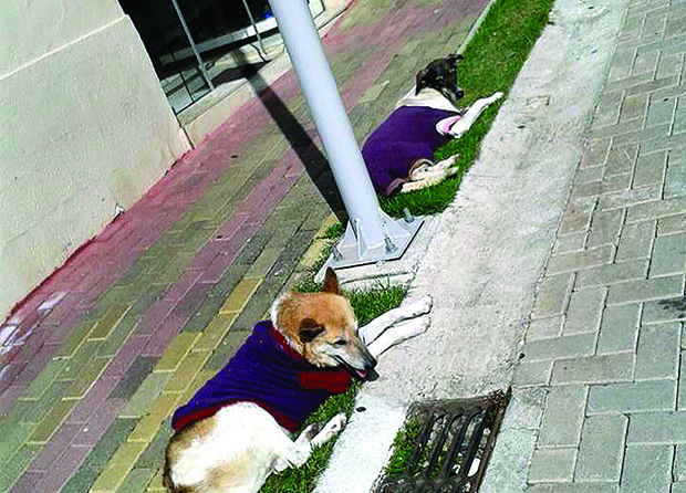 CENA - Cachorros