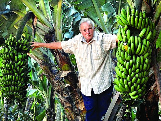 CENA - banana XXdd