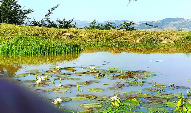 CENA lago florido 1 xx